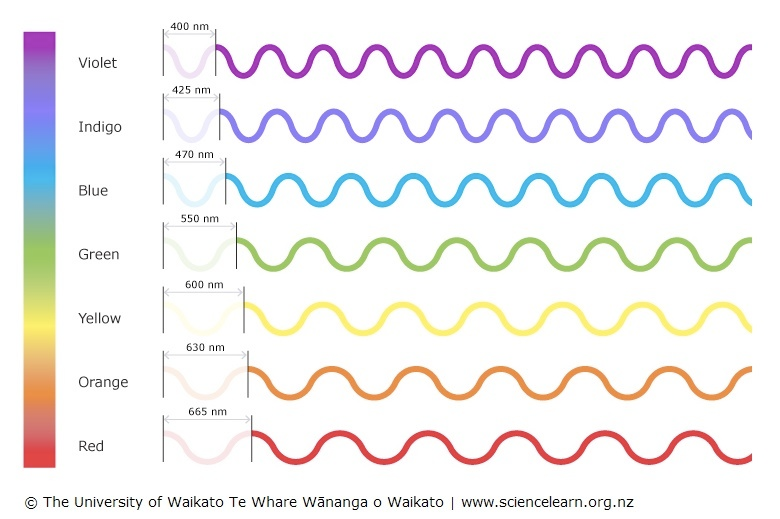 Diagram showing the relative wavelengths of different colours of visible light.
